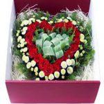 Hoa hộp 107