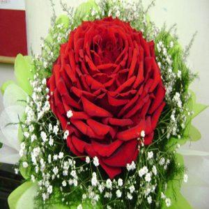 hoa một bông 1028